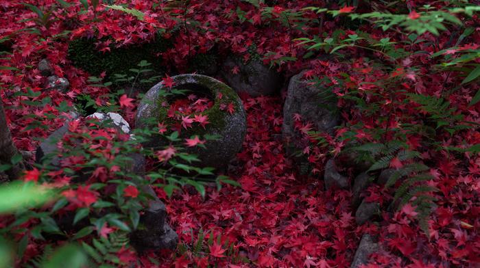 nature, foliage, stunner, autumn, Japan