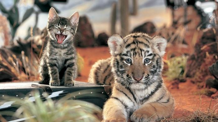 фото, тигренок, природа, креатив, котенок, кошки, звери, животные
