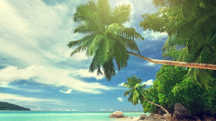 sky, summer, palm trees, clouds, tropics, beautiful, stones, beach, ocean