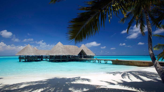 clouds, sand, beach, palm, nature, sky, ocean