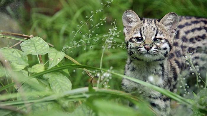 animals, stripes, greenery, muzzle, beauty