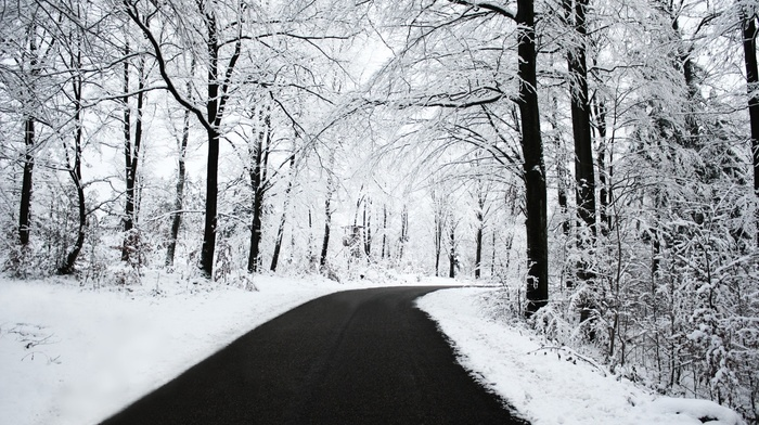 trees, road, nature, snow, winter