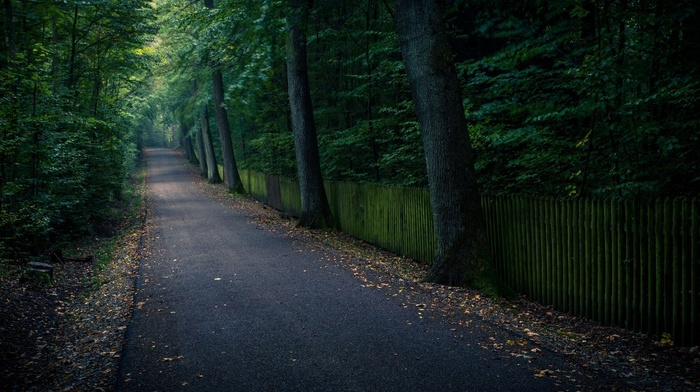trees, leaves, runway, nature, tree