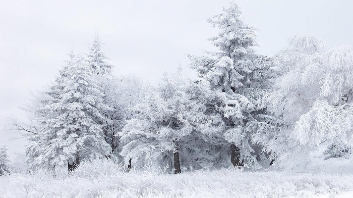 snow, nature, winter, trees