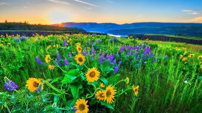 flowers, Ukraine, mountain, light, hills, morning, grassland, nature, theme, river, beautiful