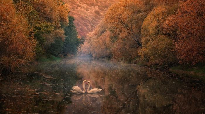 autumn, reflection, river, nature