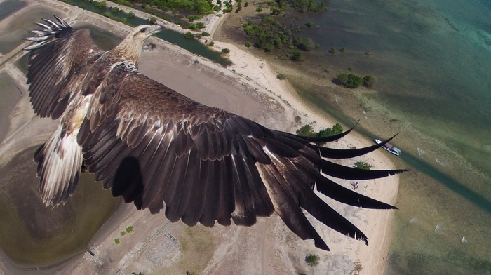 height, fly, coast, animals, sky, Earth, eagle, water, sand, bird, boat