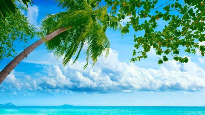 summer, clouds, theme, beach, tropics, island, nature, palm trees, sky, ocean
