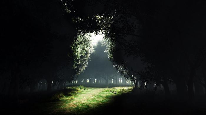 nature, glade, light, trees