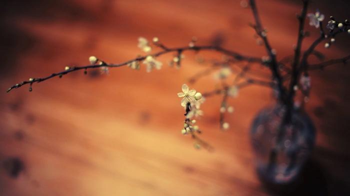 twigs, flowers, macro, depth of field