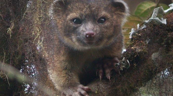 animals, tree, beauty, eyes, ears, muzzle