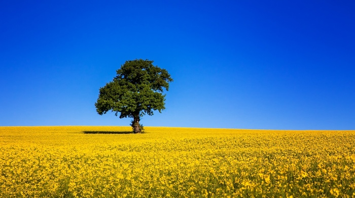 tree, field, nature, sky, beautiful, Ukraine
