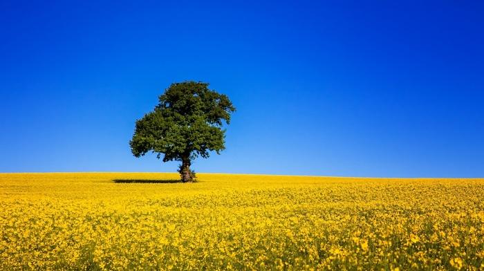 tree, field, nature, sky, beautiful, Ukraine