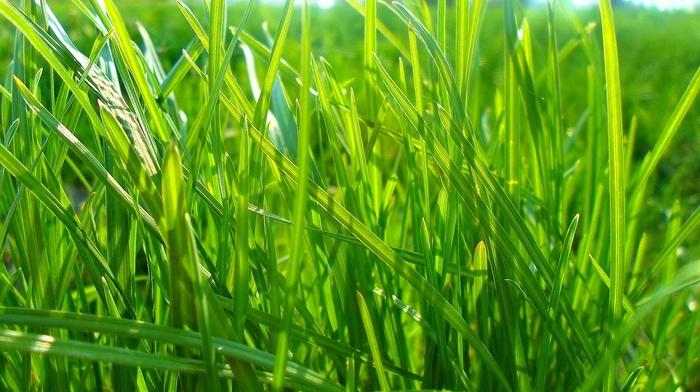 greenery, summer
