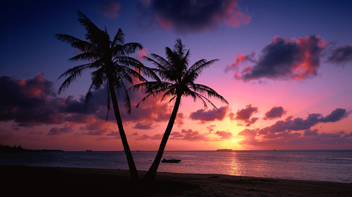 stunner, sunset, evening, clouds, beach, sea, palm trees