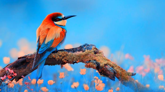 blue background, animals, bird, branch