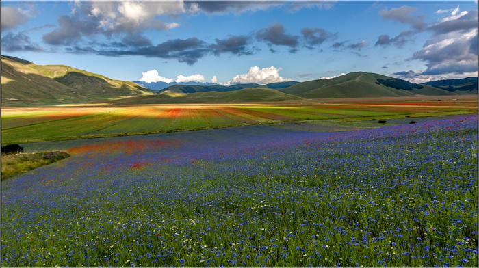 flowers, field, grassland, sky, stunner, mountain