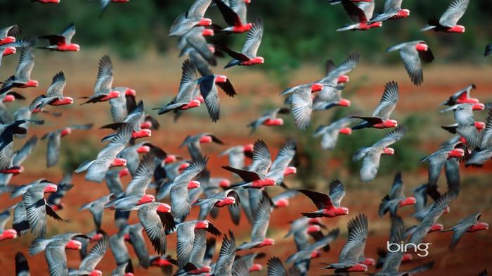 birds, nature, animals, fly