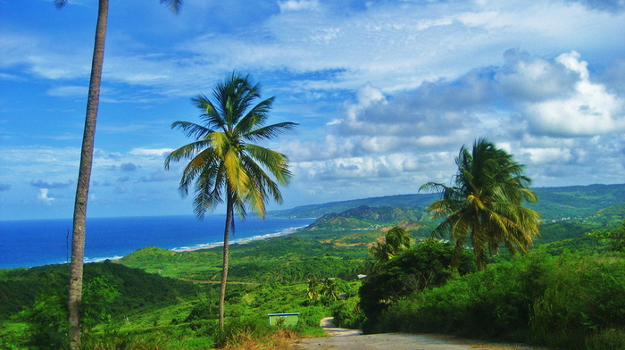 sky, greenery, palm trees, nature, ocean, road