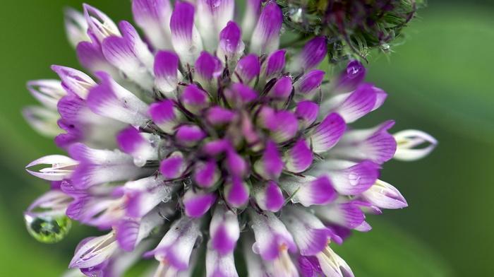 flower, beauty, macro