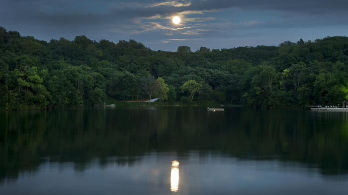 trees, moon, forest, reflection, stunner, sky