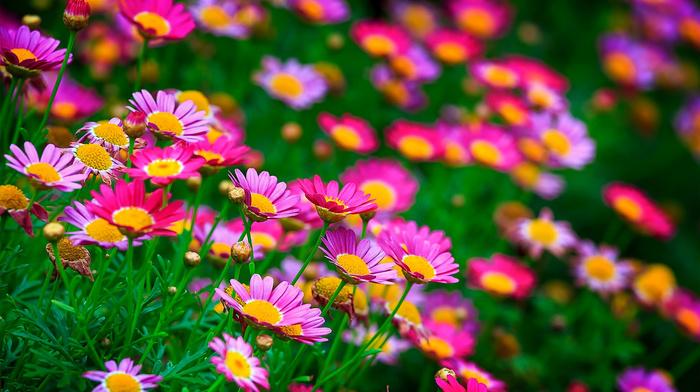 summer, macro, theme, nature, photo, flowers