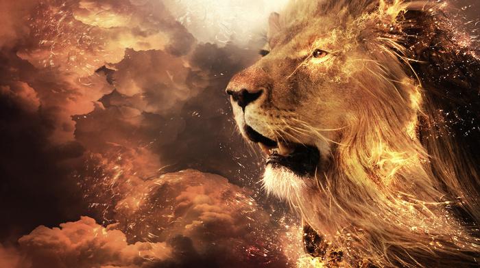 fantasy, muzzle, lion, fire
