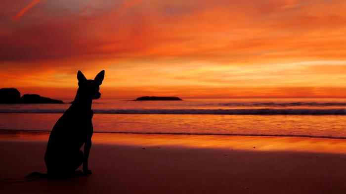 пляж, море, животные, закат, собака