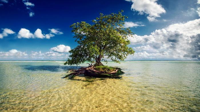 отдых, пляж, природа, дерево, залив, океан, небо, красивые, островок, облака, тема, красиво