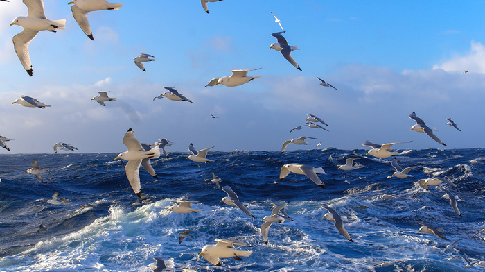 waves, stunner, sea, birds, water, ocean