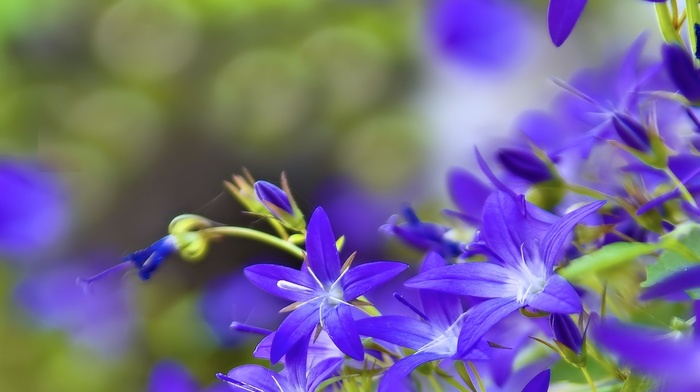 flowers, background
