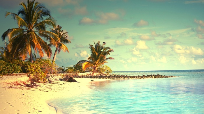 beach, summer, palm trees, resort, ocean, sky, nature, clouds, tropics, jungle