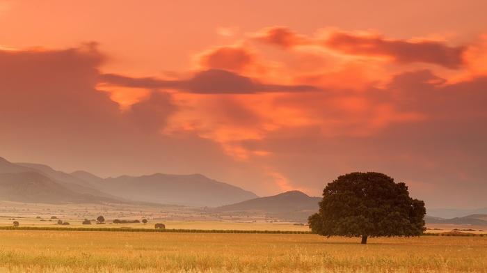 расвет, дерево, горы, красота, поле, савана, закат, лето, природа, степь