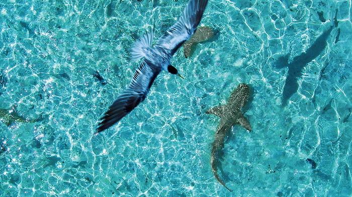 bird, beauty, reflection, ocean, animals