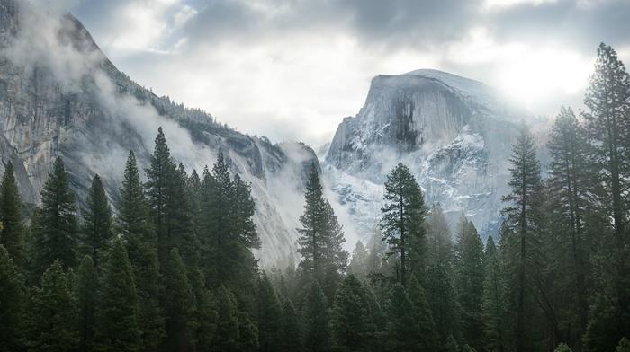 горы, туман, деревья, природа