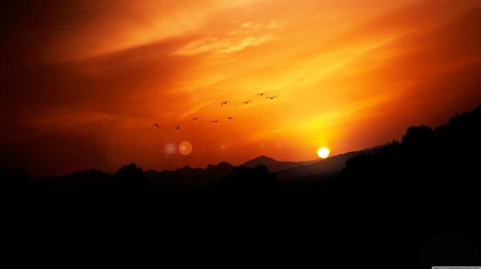пейзаж, закат, природа, птицы