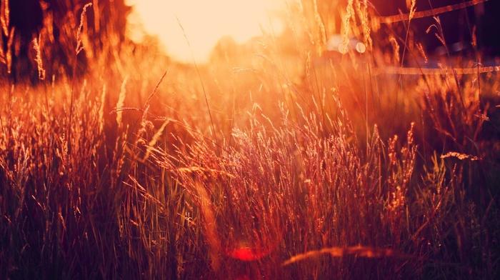 nature, filter, sunlight, grass