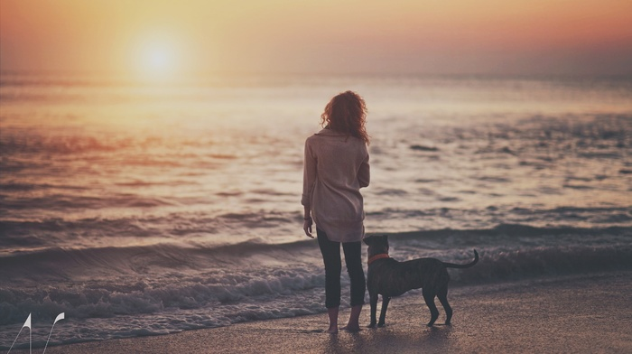 people, sunset, beach, sea, dog