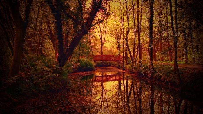 вода, природа, мост