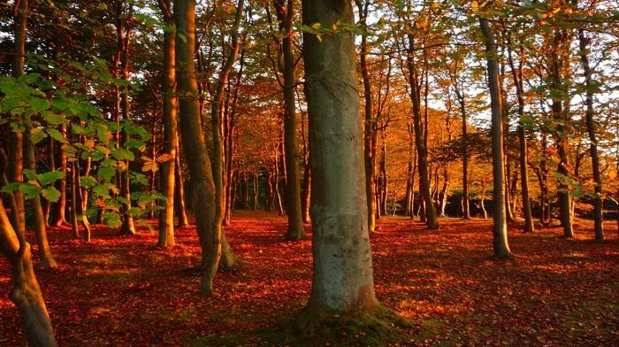 деревья, лес, листья