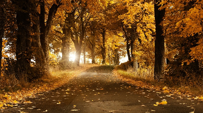 road, fall, nature