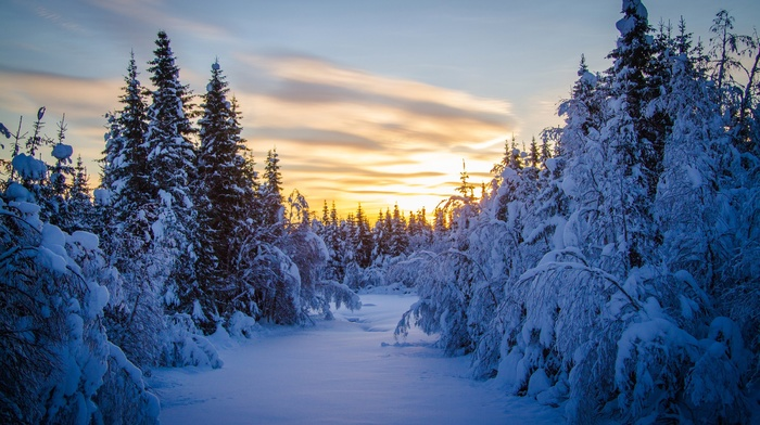деревья, зима, снег