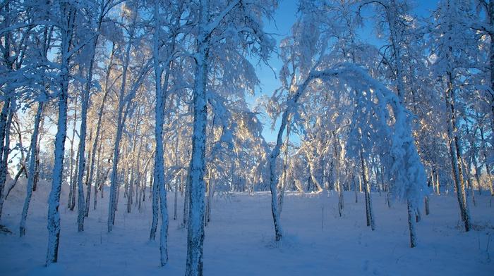 лед, пейзаж, зима