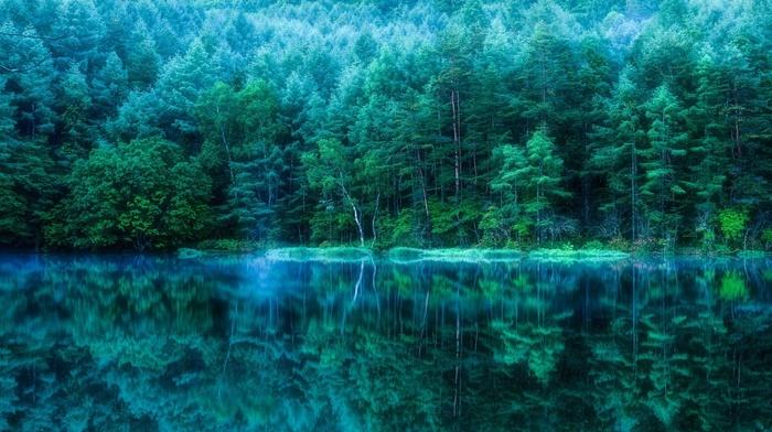 природа, вода, лес