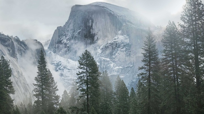 trees, mist, overcast, Yosemite National Park, mountain, snow, USA, clouds, landscape, forest, nature