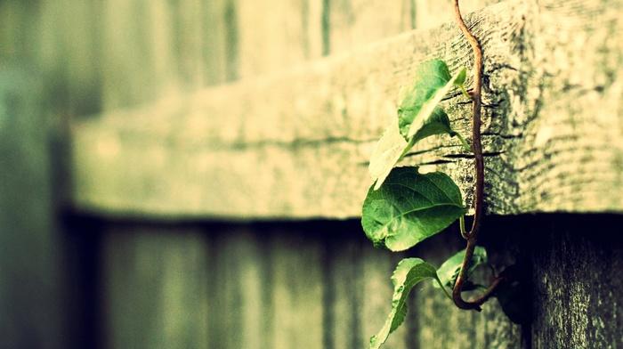 depth of field, macro, wood, vintage, vines, filter, leaves, plants