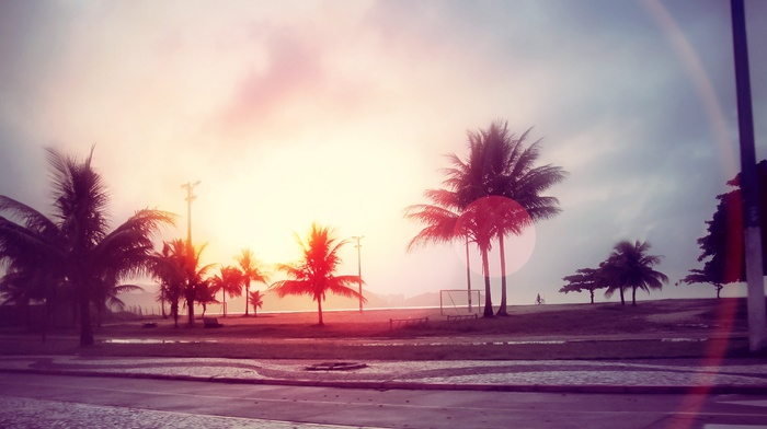 filter, street, lens flare, beach, trees, sunlight, palm trees