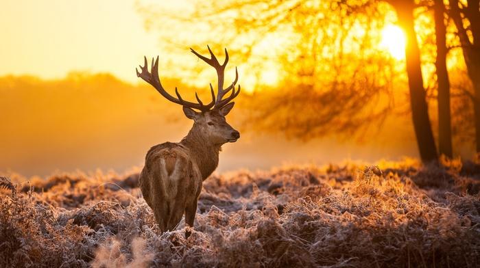 animals, sunlight, landscape, deer, mammals, nature