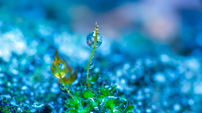 green, photo manipulation, colorful, macro, blue, nature, water drops, plants, depth of field