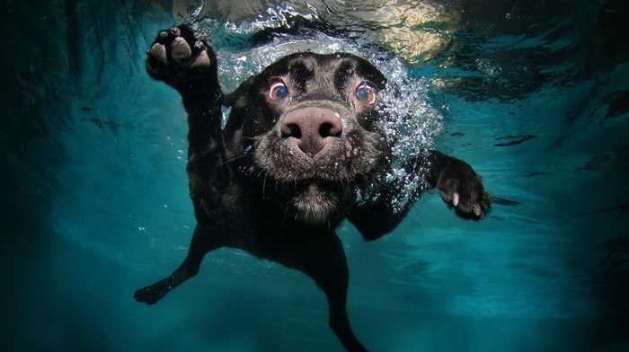 muzzles, underwater, animals, bubbles, water, dog, swimming, legs, nature